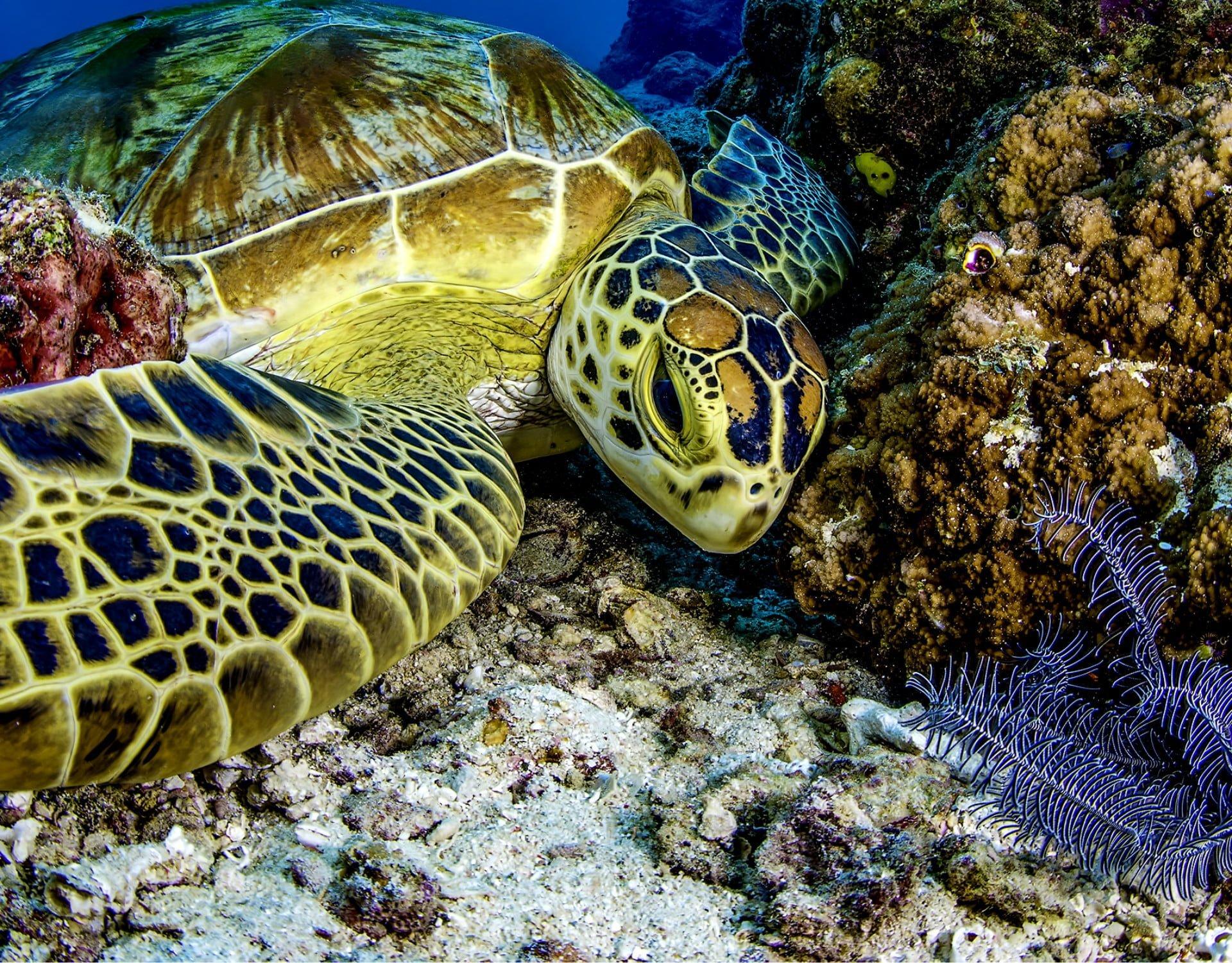 Turtle Dream