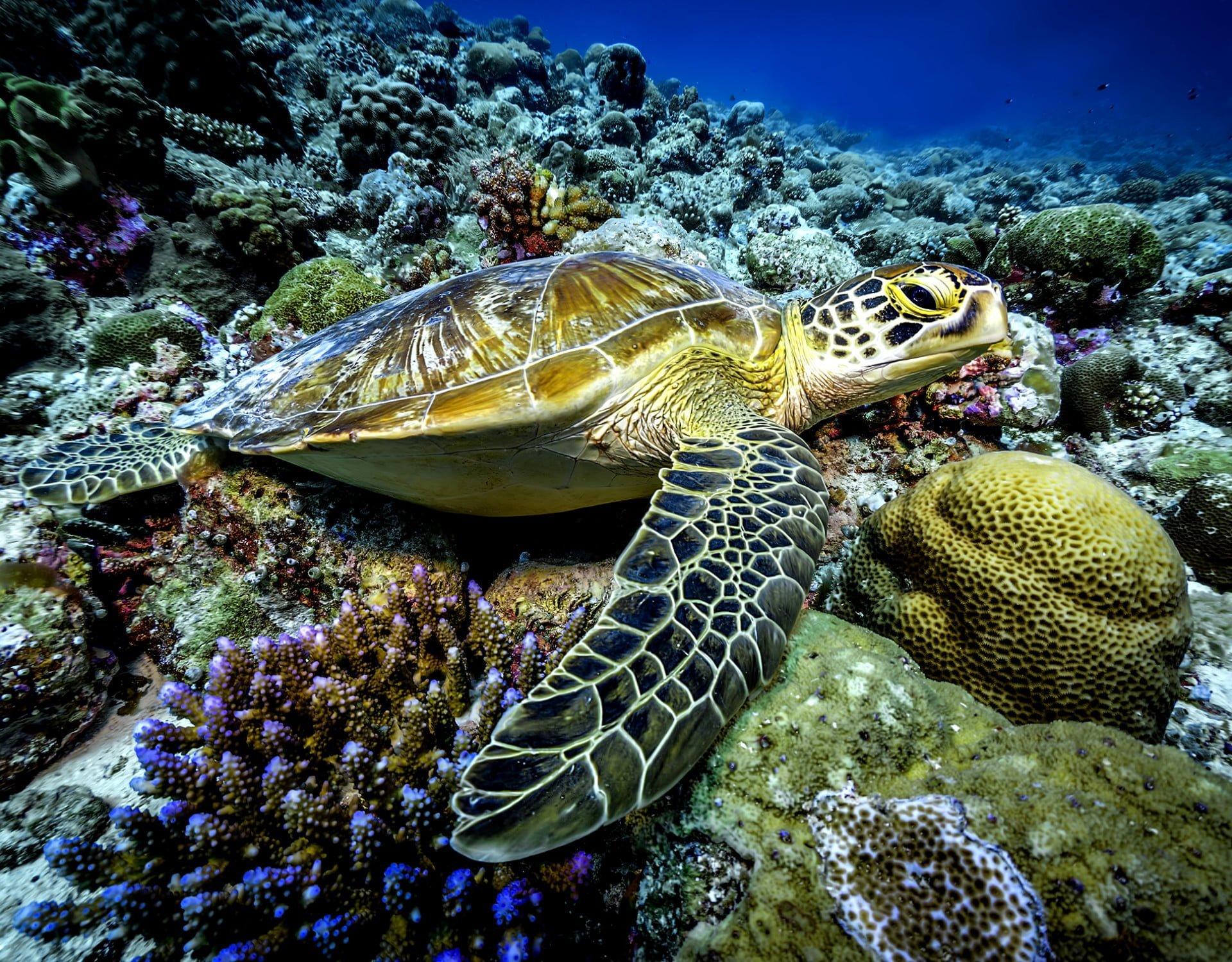turtle Palau 0002 refined